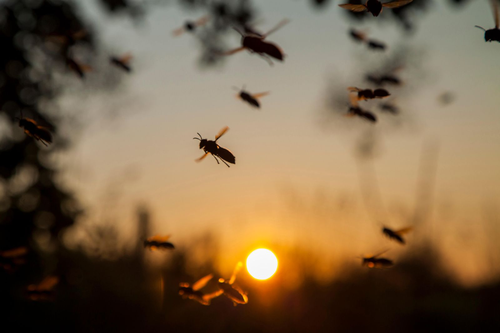 Do you Know How Many Kinds of Insects Exist in the World